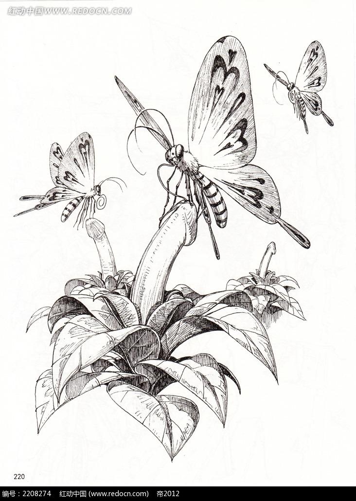 落在花上的蝴蝶手绘线稿图
