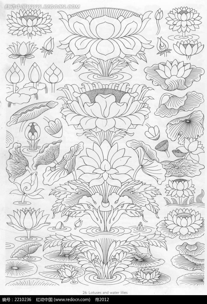 荷花手绘图形图案