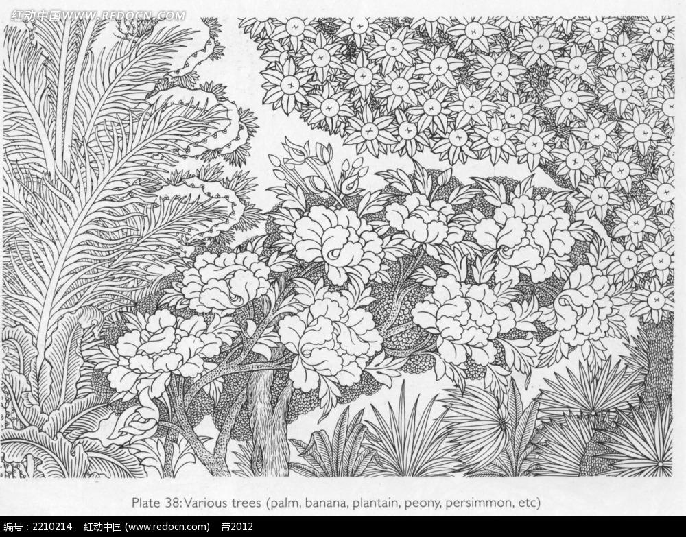 树林花果手绘线描图形
