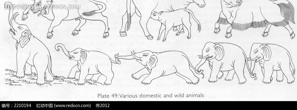 大象野牛手绘线描图形
