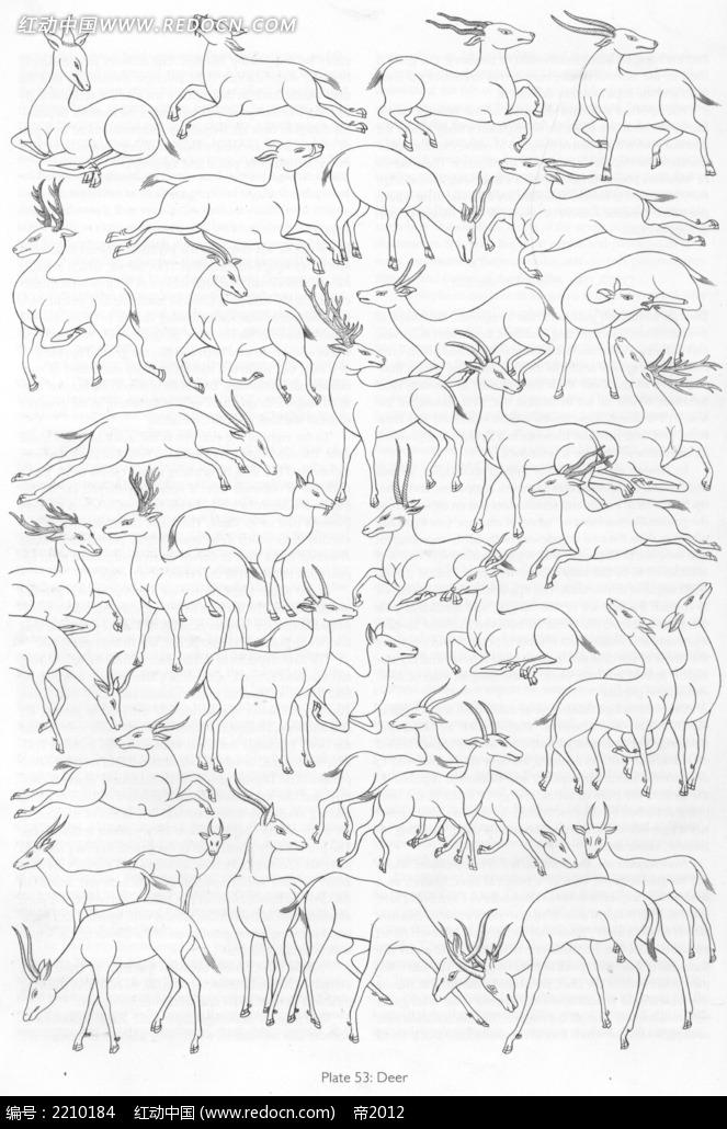 野鹿形态手绘线描图形