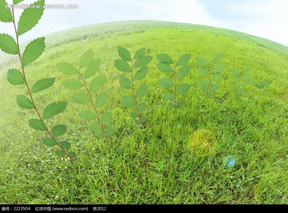 绿叶植物成长环保图片