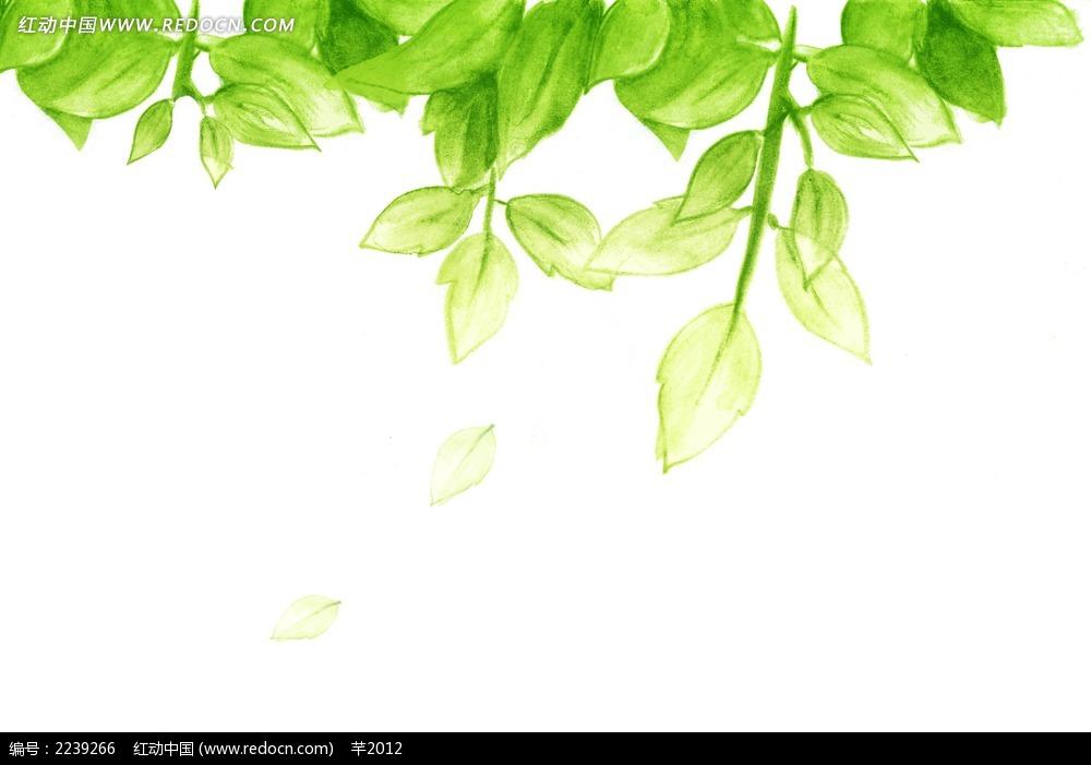 手绘鲜嫩的绿叶