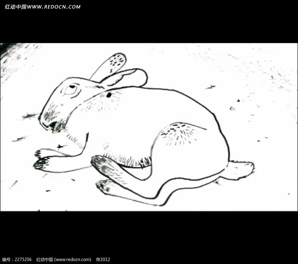 手绘线条兔子视频图片