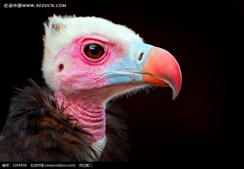 免费素材 图片素材 生物世界 空中动物 > 雏鹰图片  免费下载我要改图