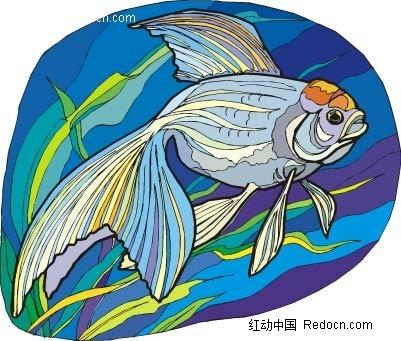 鹤顶红金鱼动物卡通手绘插图