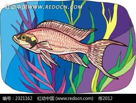 红色珊瑚鱼动物卡通手绘插图