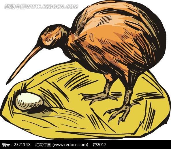 几维鸟动物卡通手绘插图