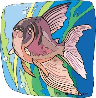 红鲷鱼动物卡通手绘插图图片
