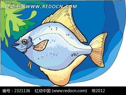 鲷鱼动物卡通手绘插图