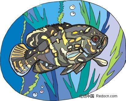 石斑鱼动物卡通手绘插图图片