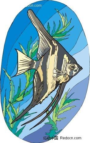 天竺鲷动物卡通手绘插图