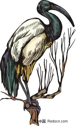 丹顶鹤动物卡通手绘插图