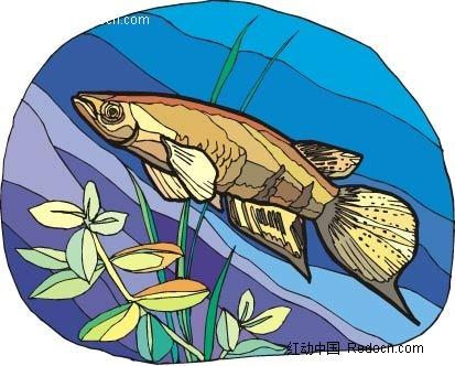 孔雀鱼动物卡通手绘插图