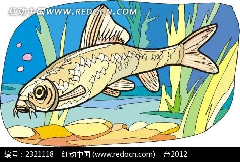 黄花鱼动物卡通手绘插图