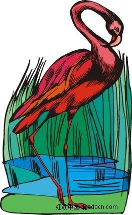 红鹤河边动物卡通手绘插图图片