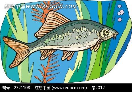 鲈鱼动物卡通手绘插图
