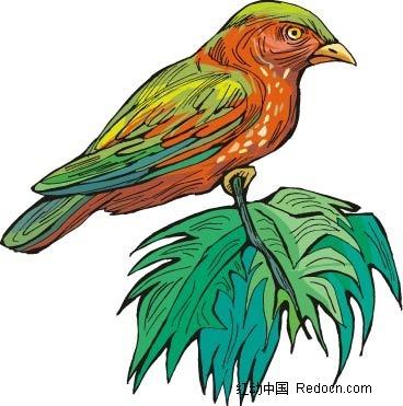 禽类 手绘图