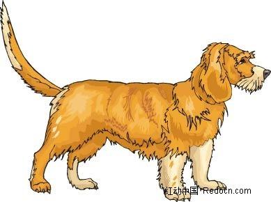 宠物狗艳丽色彩动物插画