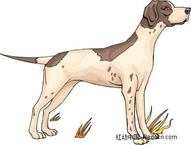 狐犬艳丽色彩动物插画