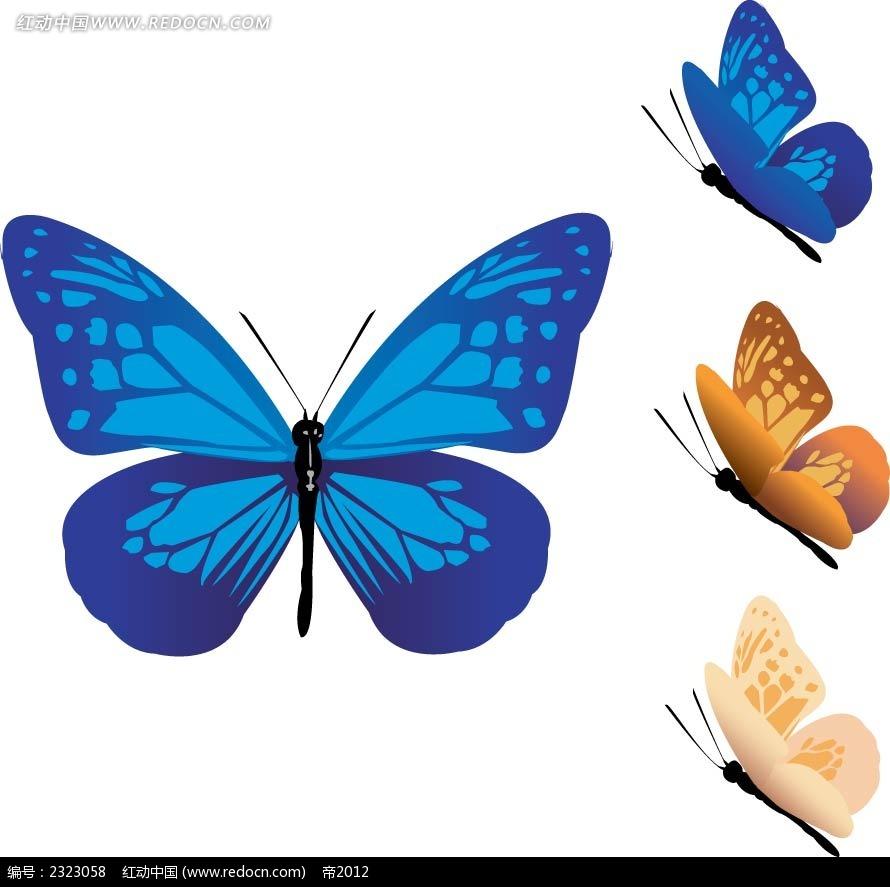 蝴蝶正面侧面手绘画
