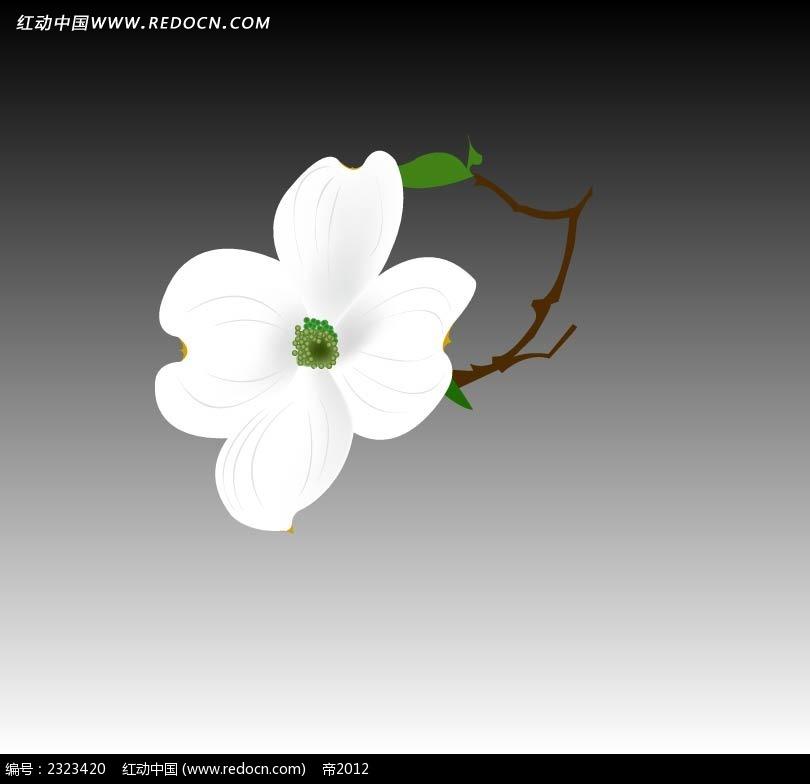 白色小花手绘图形