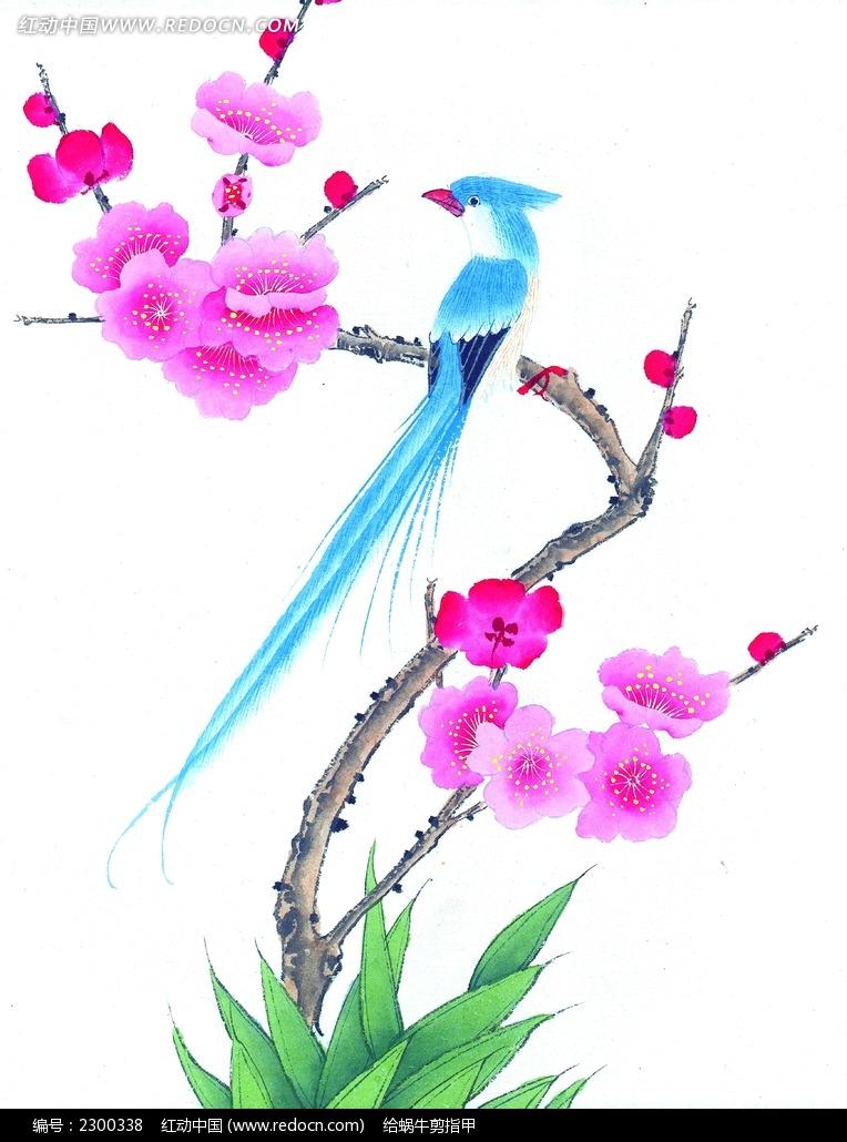 梅花枝头的蓝色喜鹊
