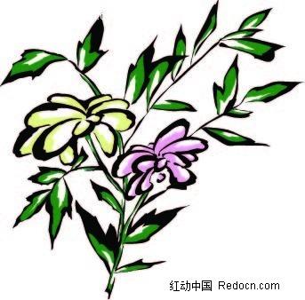 菊花手绘画