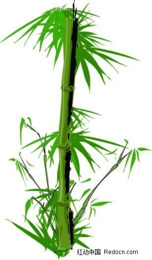 竹子手绘图形设计