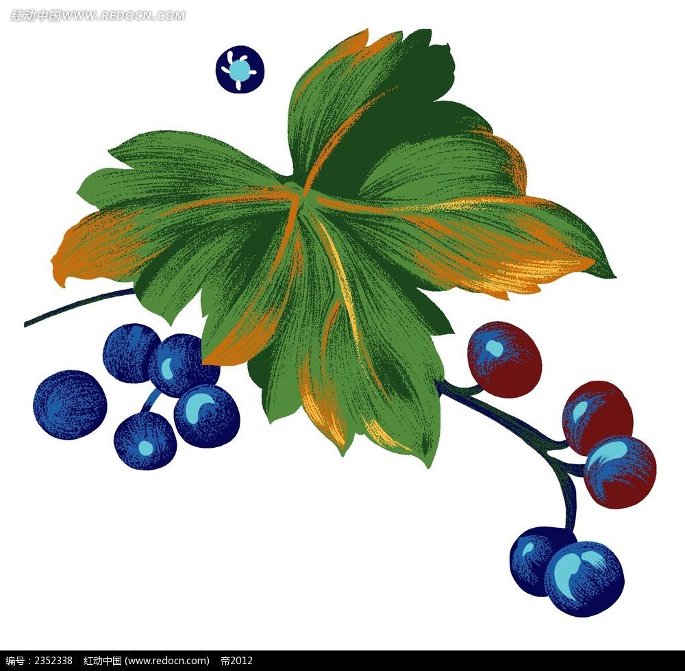 手绘蓝莓psd素材