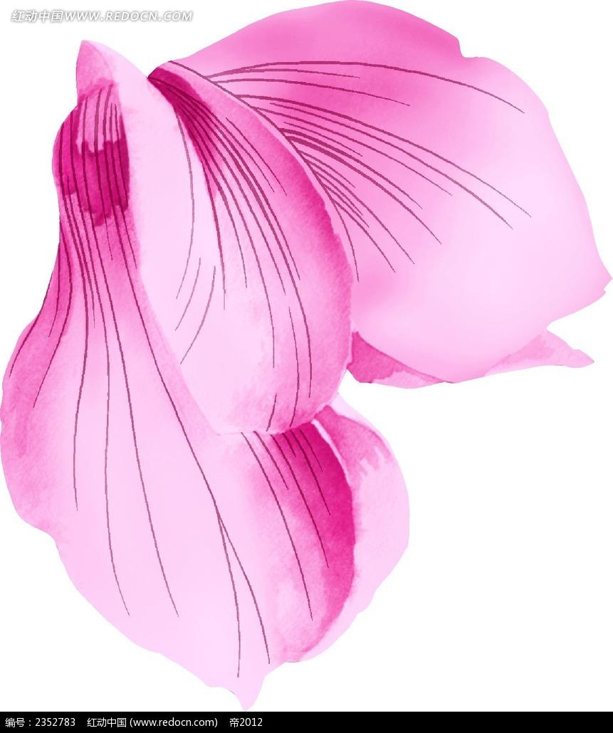 木槿花花瓣手绘水彩漫画