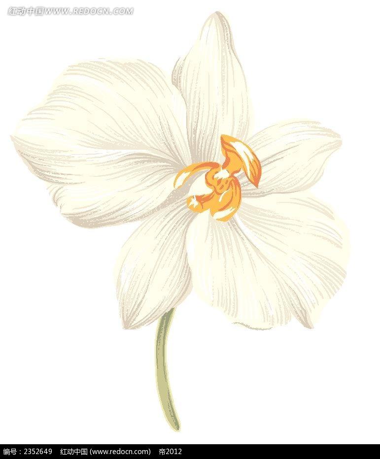 漂亮的白色手绘花朵