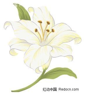 纯洁的手绘百合花