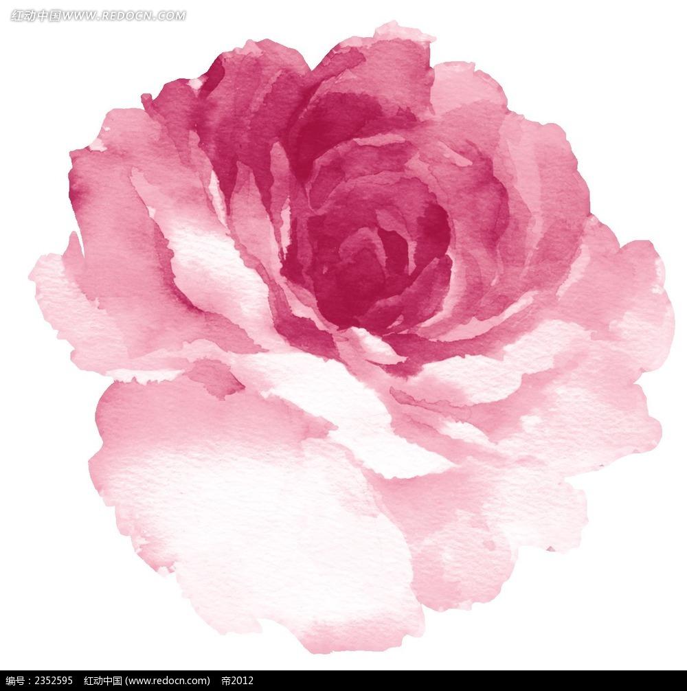 手绘粉红色牡丹花