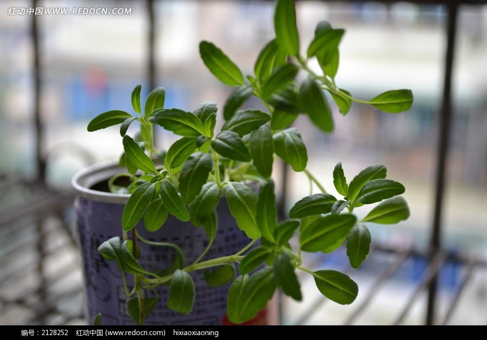 窗台绿色盆栽小植物图片