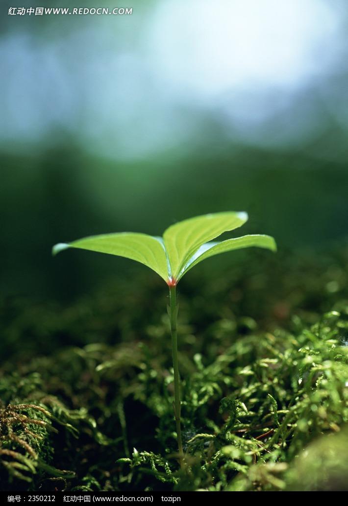 免费素材 图片素材 生物世界 花草树木 幼苗  请您分享: 红动网提供花