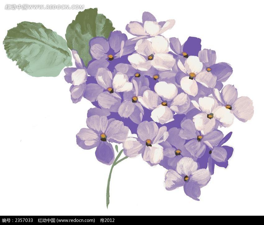 紫色紫薇花彩色线描装饰画