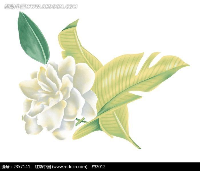 手绘茉莉花与叶子psd素材
