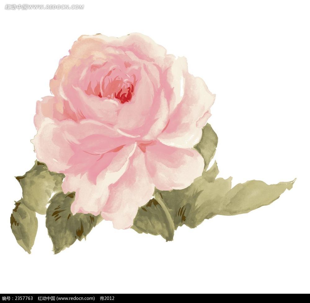 手绘粉红玫瑰psd素材