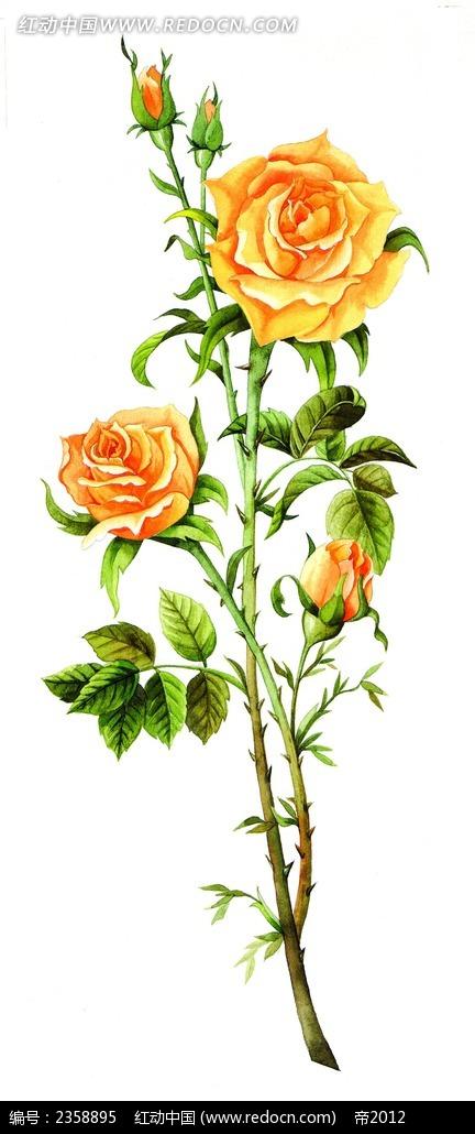 黄玫瑰手绘分层素材
