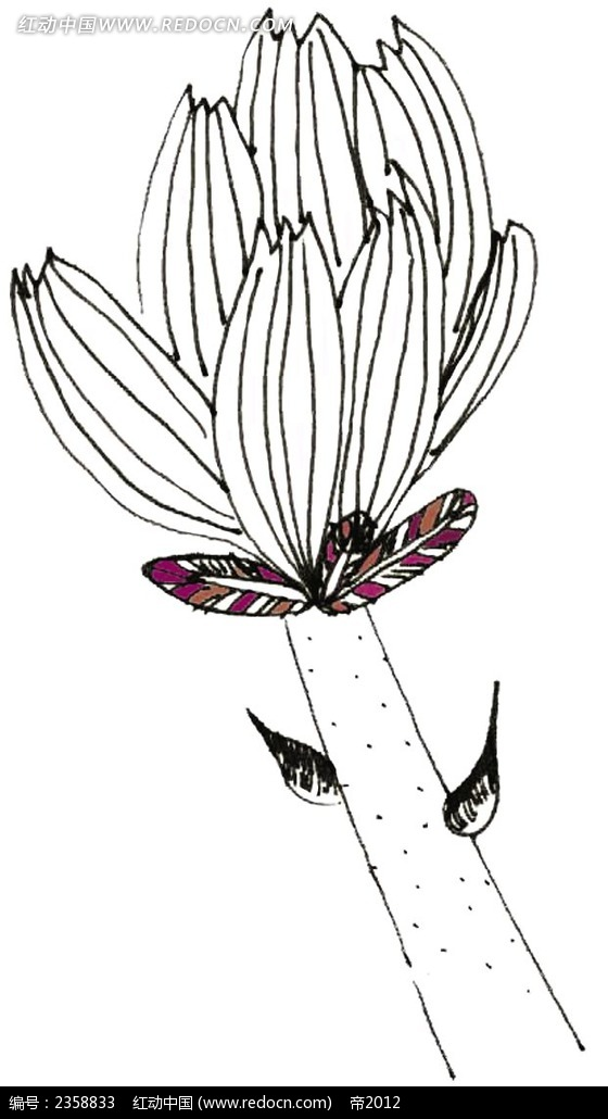 黑白线稿花朵