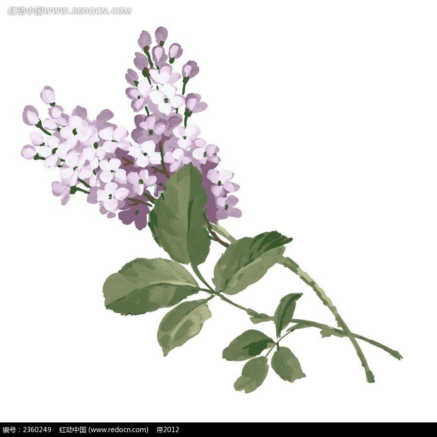 手绘紫丁香
