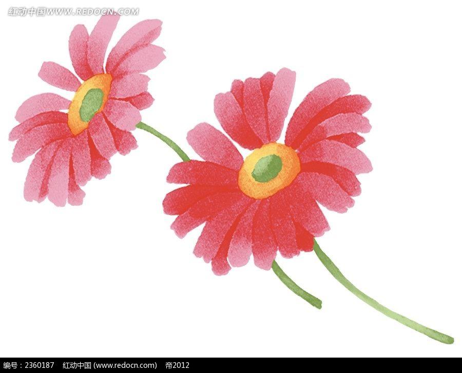 两朵手绘太阳菊