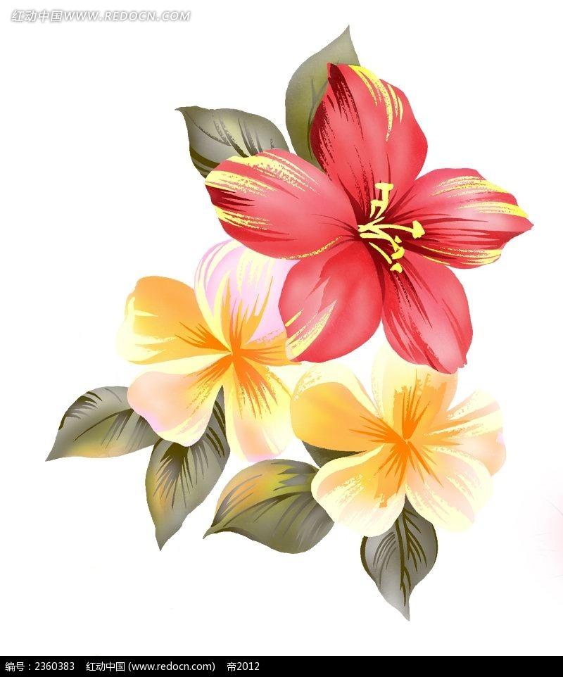 花的手绘图片-扶桑手绘