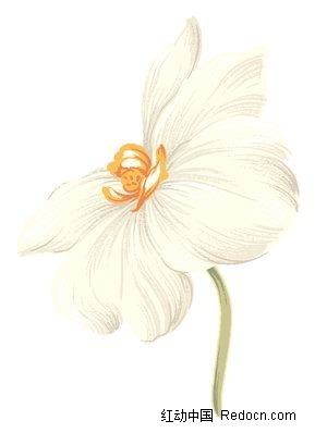 姣美的白色蝴蝶兰手绘素材