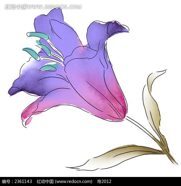 一枝手绘百合花