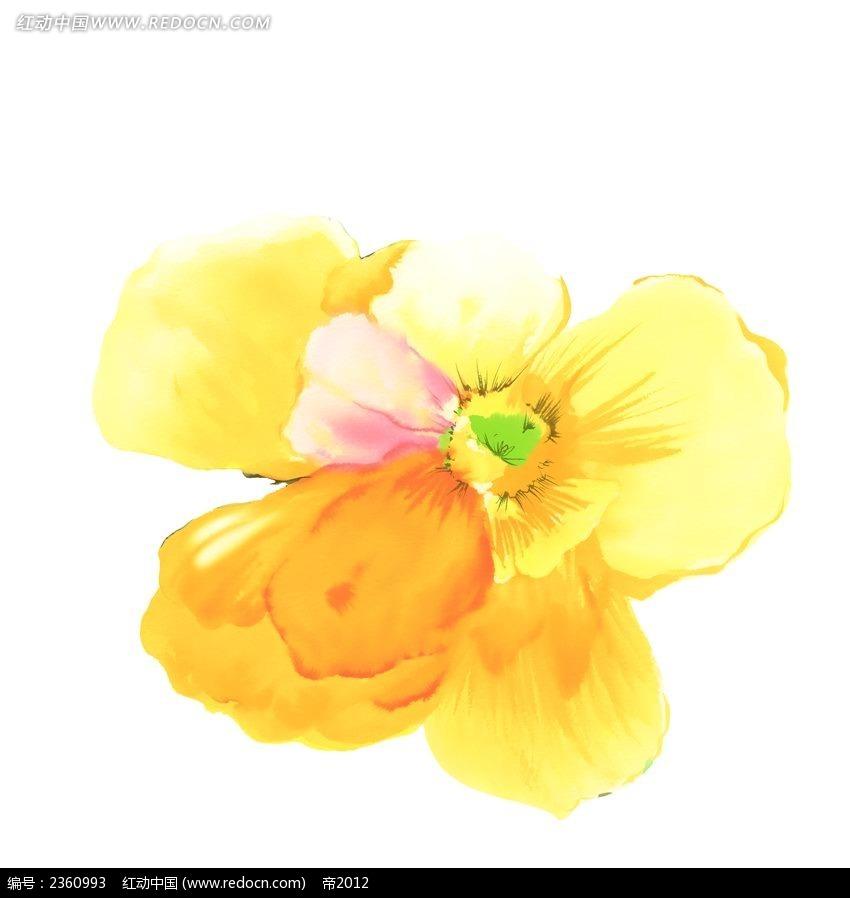 手绘黄色罂粟花