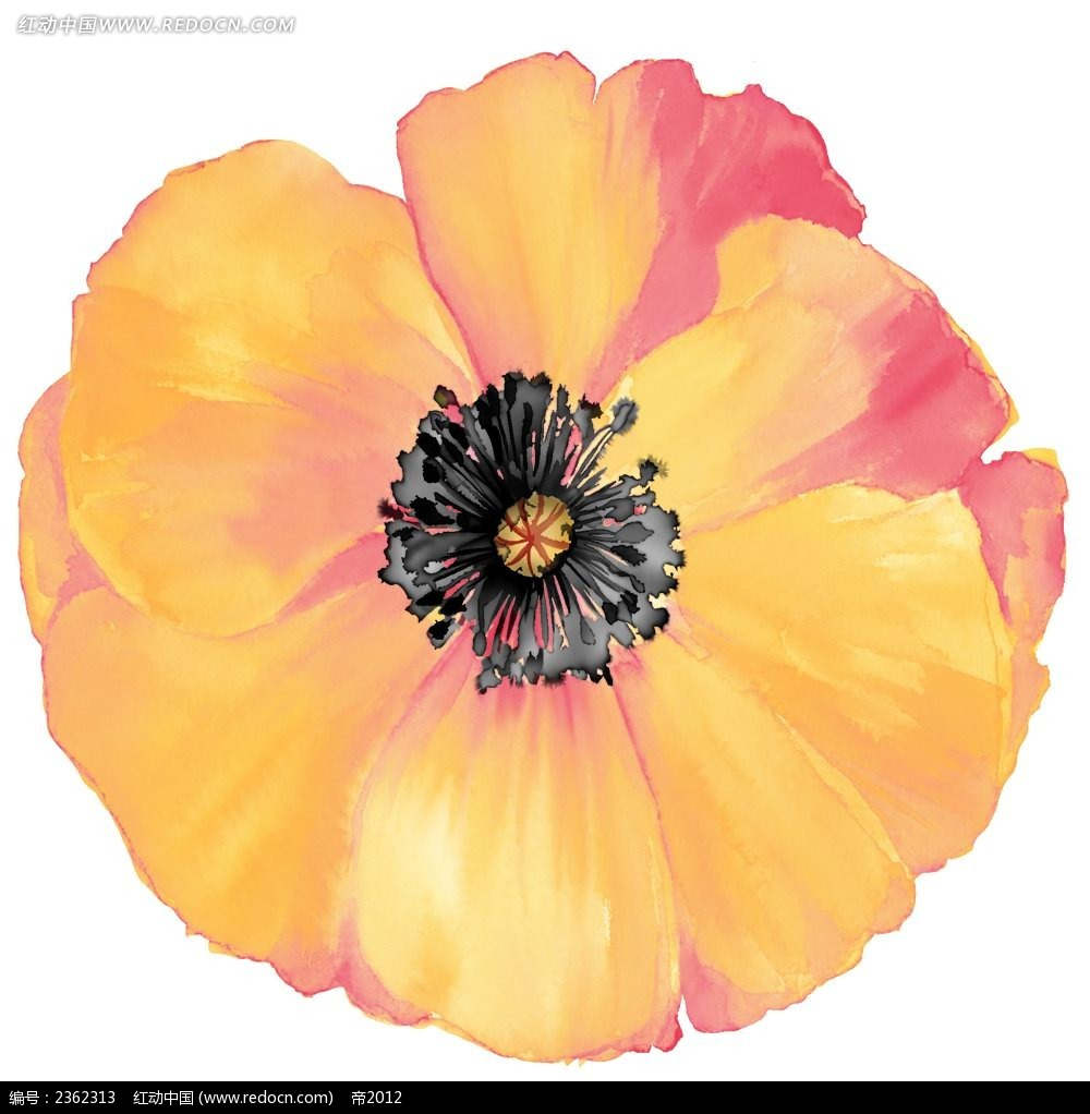 手绘罂粟花