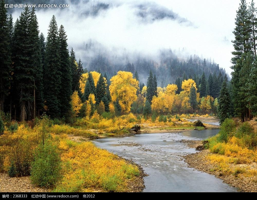 秋天森林风景摄影图片