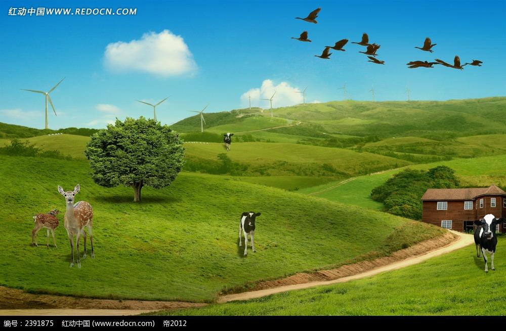 野外牧场风景图片
